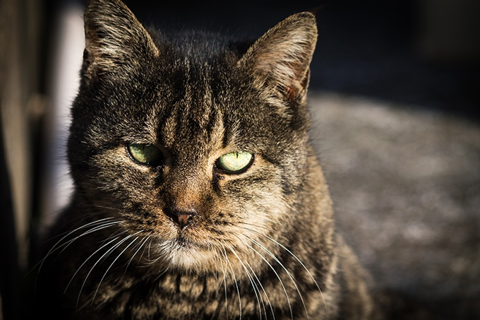 猫 かなしみ