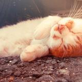 寝てるネコ